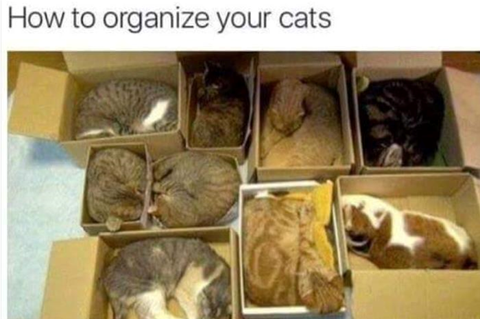 cats in order