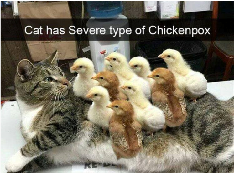 Cat Has Chickenpox