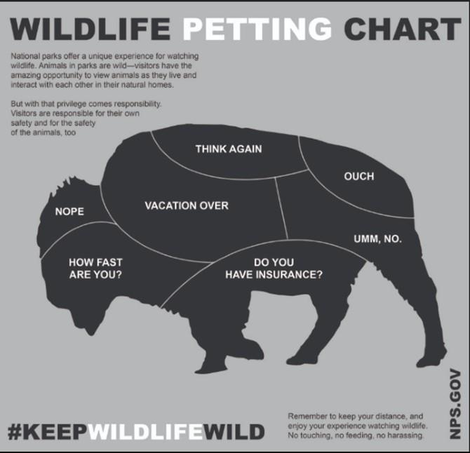Honest Wildlife Petting Chart